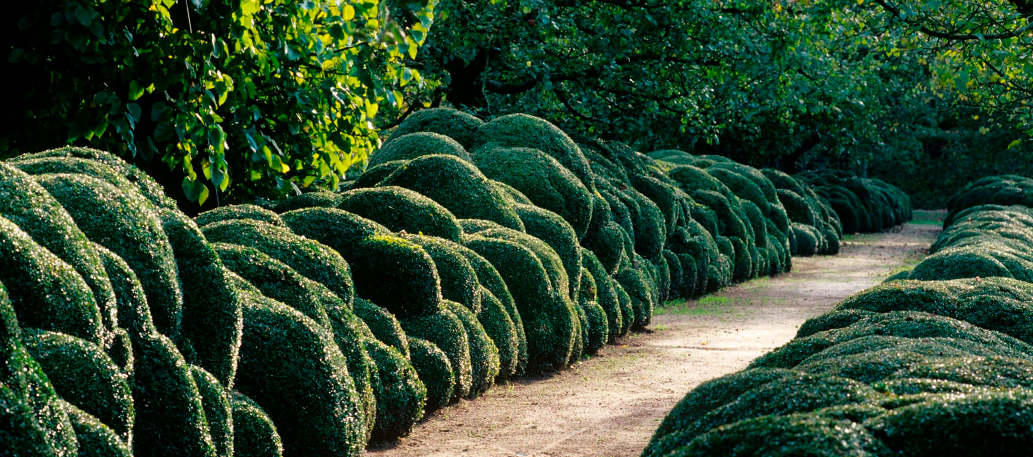 The most iconic aspect of the Wirtz style is his unconventional and sculptural use of clipped hedges