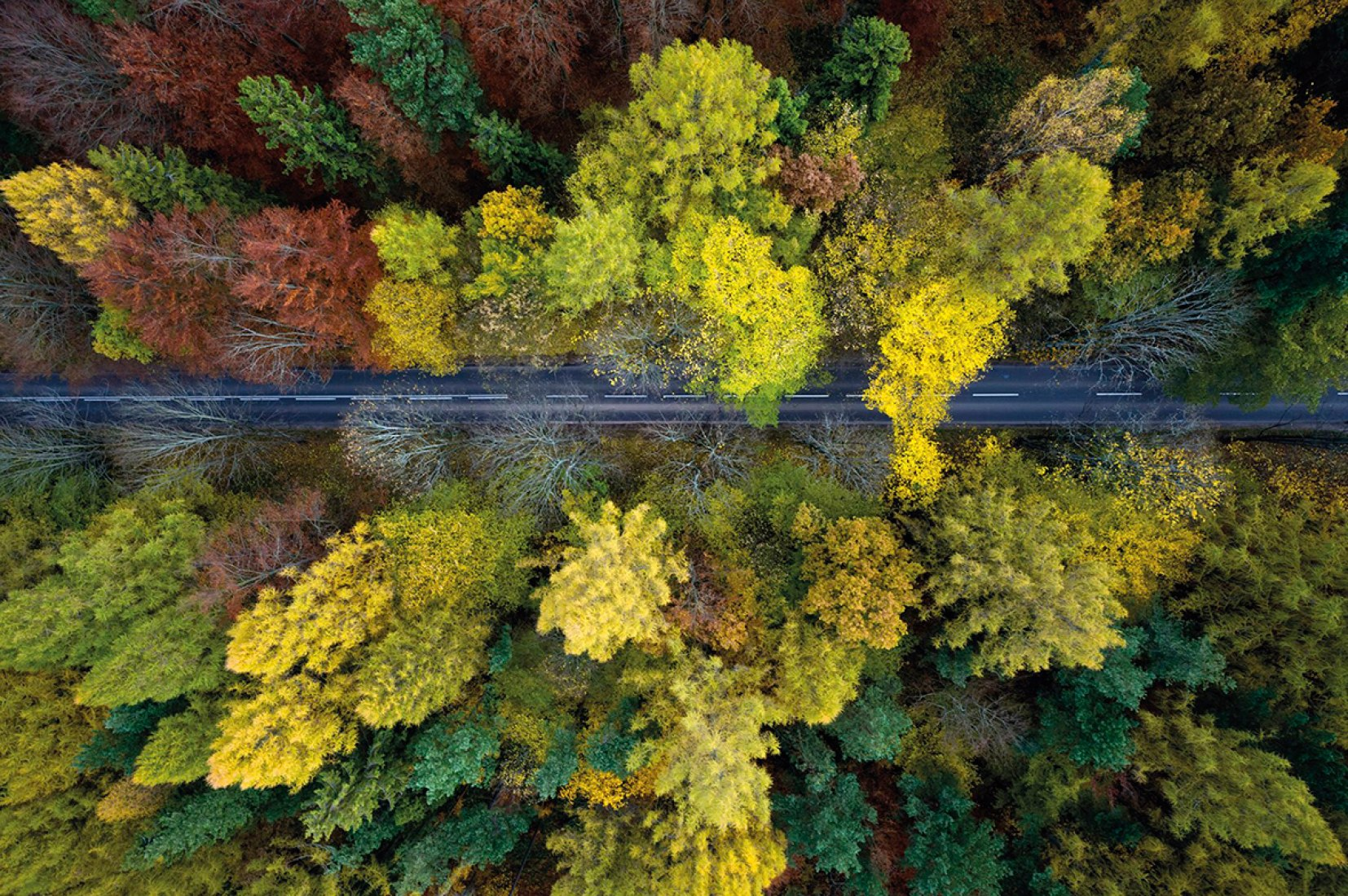 Aerial view the Poland forest. Photography © Kacper Kowalski.