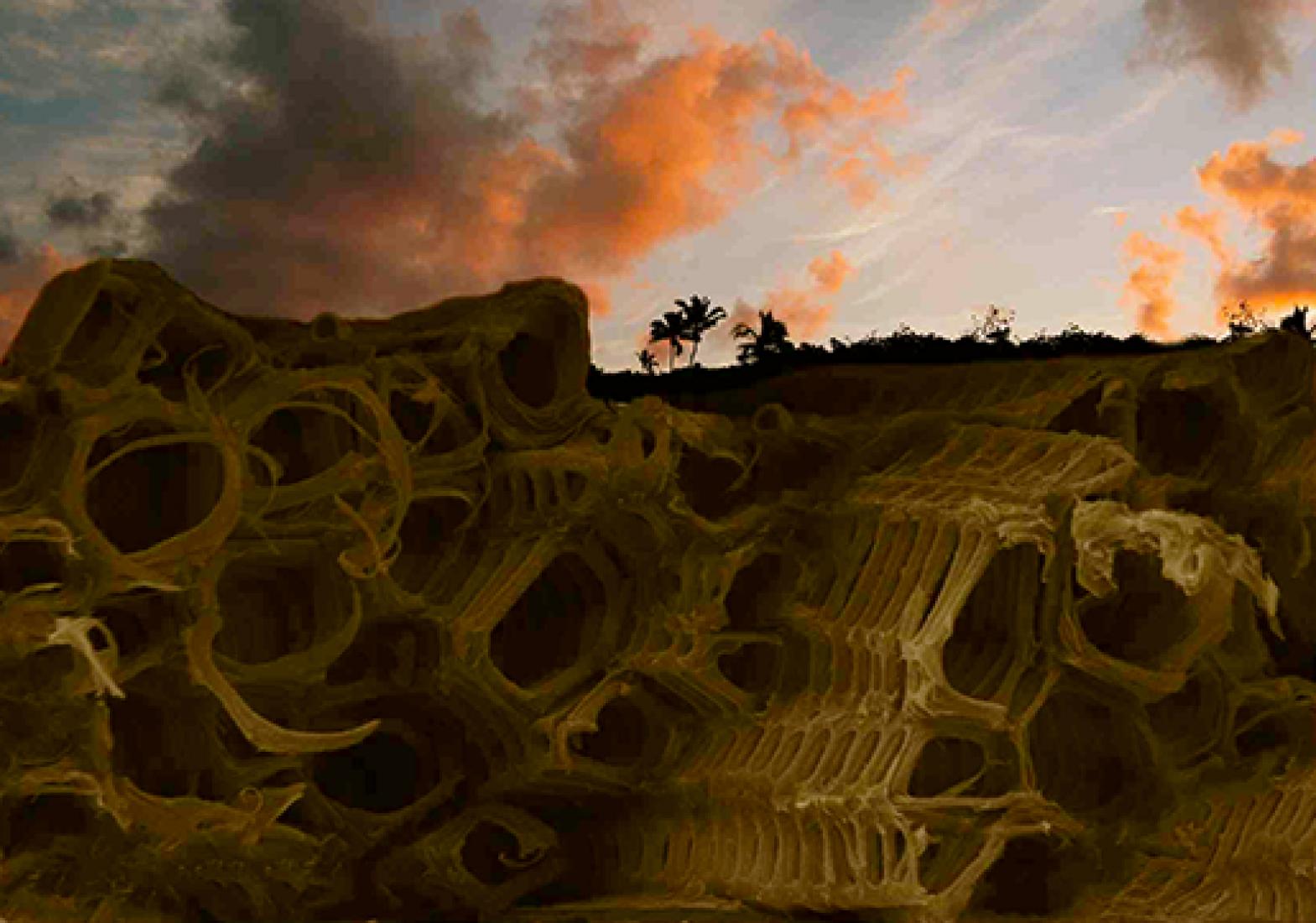 Ruinas del futuro. Cortesía de © Alberto Estévez.