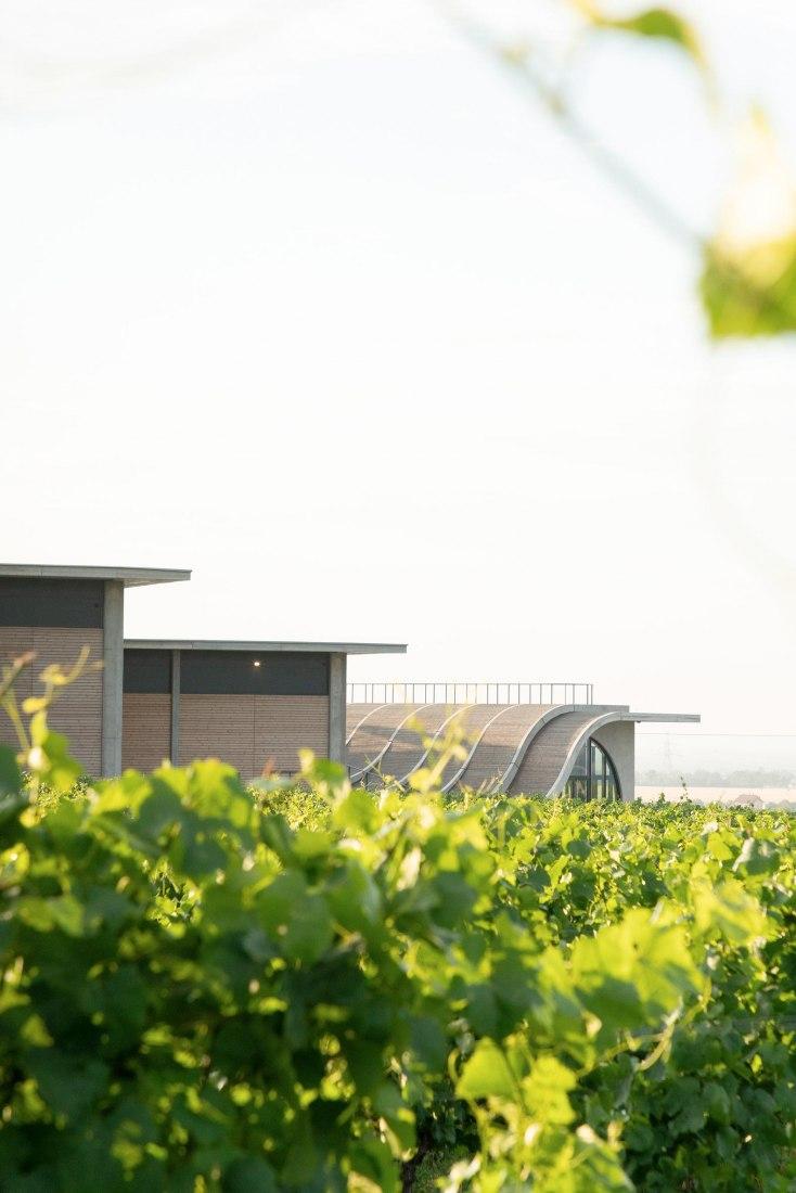 Lahofer Winery by Chybik + Kristof. Photograph by Alex Shoots