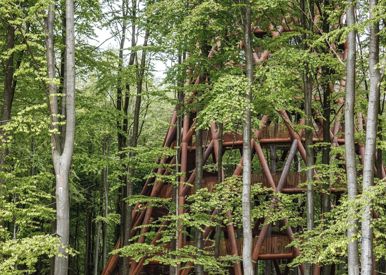 Forest Tower at Camp Adventure by EFFEKT. Photograph by Rasmus Hjortshoj. Image courtesy of EFFEKT.