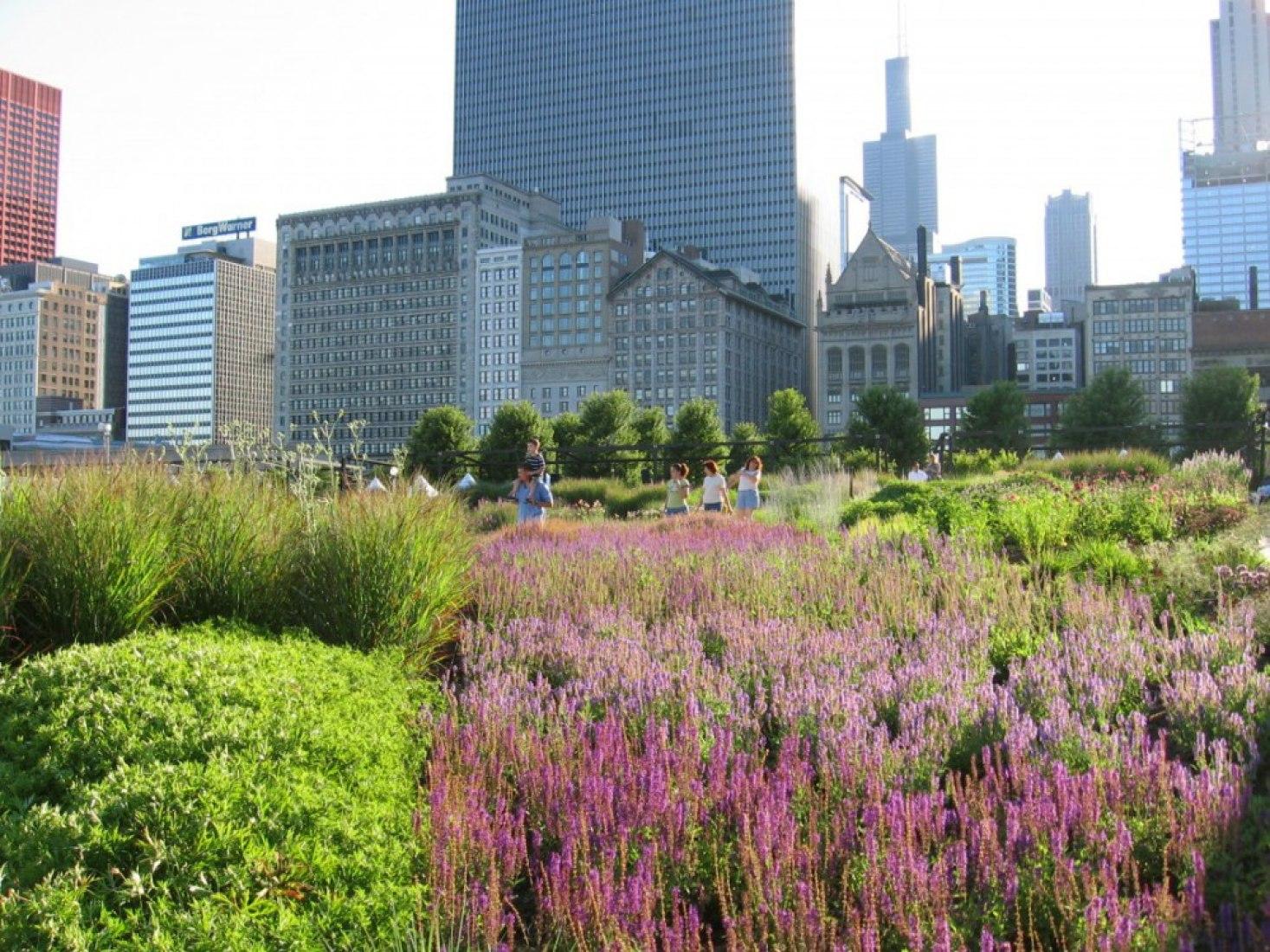 The Lurie Garden, Parque Millennium , Chicago por Gustafson Guthrie Nichol. Fotografía © L. O.   Bryan, M. Tomaras.