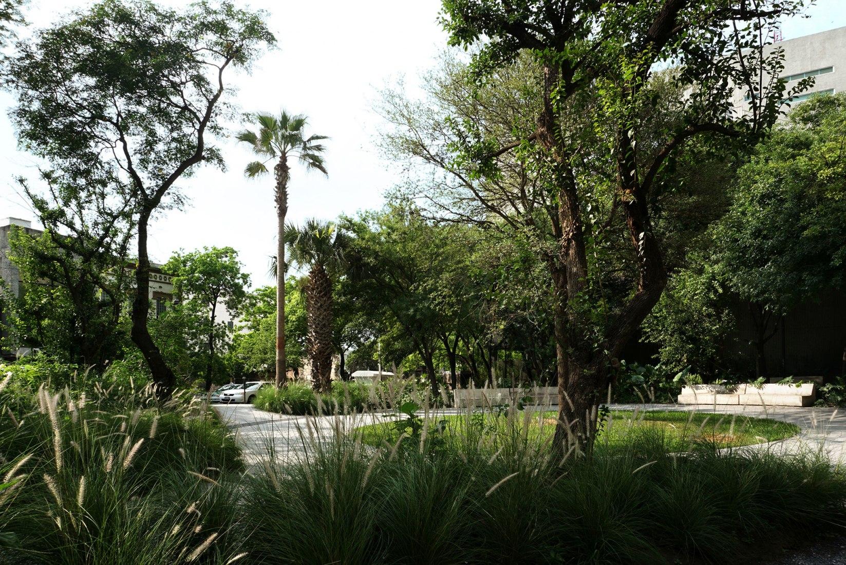 Jardín Ciudadano by Práctica Arquitectura. Photograph by César Bejar, The Raw, Archivo Práctica Arquitectura