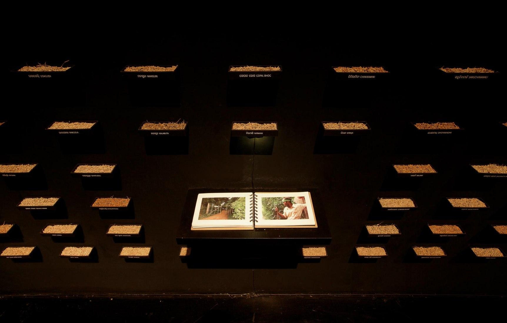 Vista de la Instalación: Documenta (13), Kassel, Alemania, 2012. 272 Variedades de semillas de arroz orgánico autóctono, n.d. Amar Kanwar. Fotografía por Henrik Stromberg. Semillas de arroz, contenedores de papel, estantes de metal y de madera, tres libros, luces LED. Dimensiones variables. Producido con el apoyo de Samadrusti, Odisha; Thyssen-Bornemisza Art Contemporary, Viena; Centre Pompidou, París; Yorkshire Sculpture Park; Public Press, Nueva Delhi y Documenta (13), Kassel. Thyssen-Bornemisza Art Conte