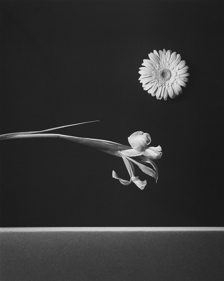 Iris and Zinnia by Robert Mapplethorpe, 1984. Gelatin silver print. 16 x 20 in / 40.64 x 50.8 cm. Photograph © The Robert Mapplethorpe Foundation. Image Courtesy of Galería Elvira González.