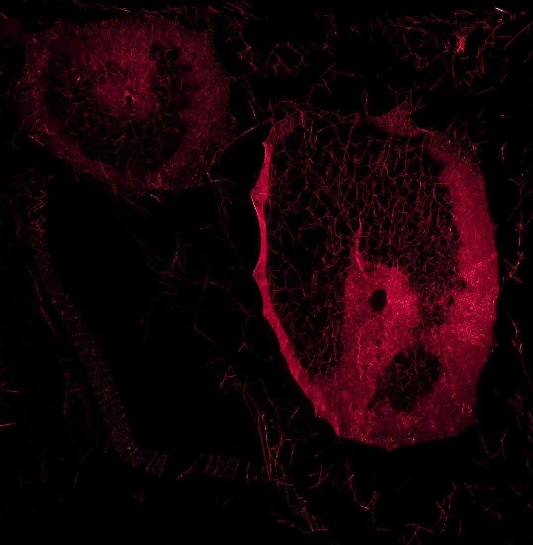 Tomás Saraceno, ¿Cómo enredar el universo en una telaraña ?, 2018. Thyssen-Bornemisza Art Contemporary Collection Fotografía Cortesía del artista | Galería Tanya Bonakdar, Nueva York / Los Ángeles