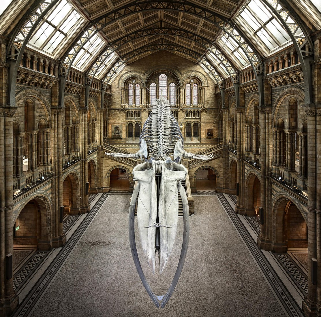 Balaenoptera musculus. 2017. Light jet, Exposure on high glossy paper, All-Dibond. 170 x 170 cm. Photograph by Christian Voigt. Cortesy of Galería Lucía Mendoza.
