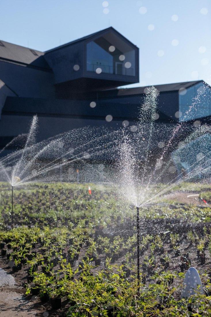 Un nuevo jardín de Piet Oudolf, en el campus de Vitra en Weil am Rhein. Fotografía por Dejan Jovanovic / Vitra
