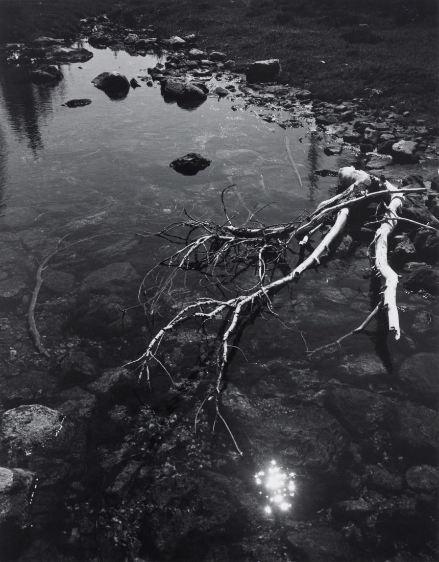 Ansel Adams. Branch and Creek, 1947. Silver print, printed ca. 1960, 13 × 10in (33 × 25.4 cm). Image courtesy of Zeit Contemporary Art, New York