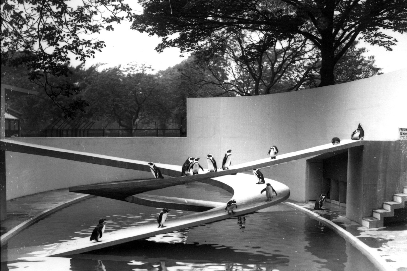 The London Zoo is not only the world's oldest zoo but it also features a unique collections of buildings that represent nearly two centuries of architectural history. A clear example is the Penguin Pool designed in 1934 by Berthold Lubetkin. The Penguin Pool at London Zoo. Photograph by Frederick William Bond, 1934.
